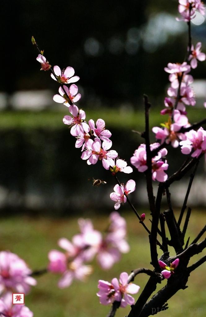 《满园春色关不住》